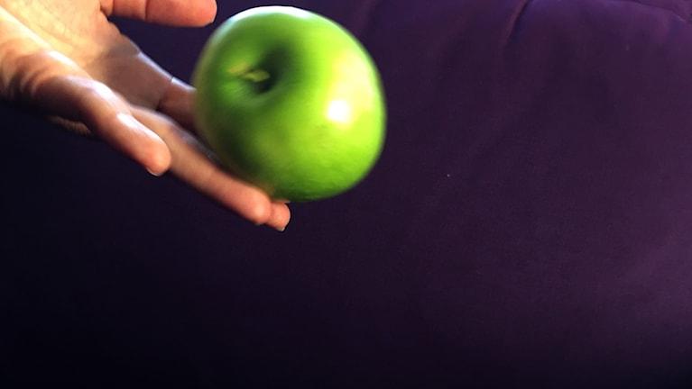 Omena tipahtaa. Ett äpple faller. Kuva/Foto: Kirsi Blomberg, SR Sisuradio
