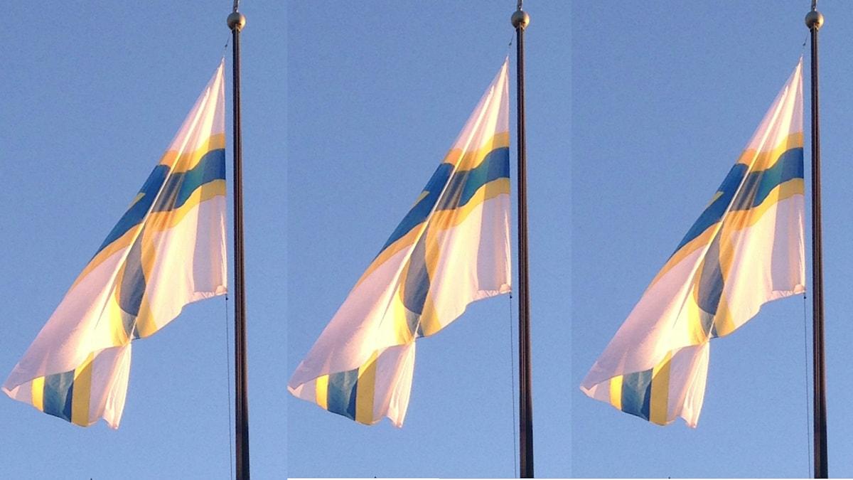 Tre stycken sverigefinnarnas flaggor, vita flaggor med blå och gula kors