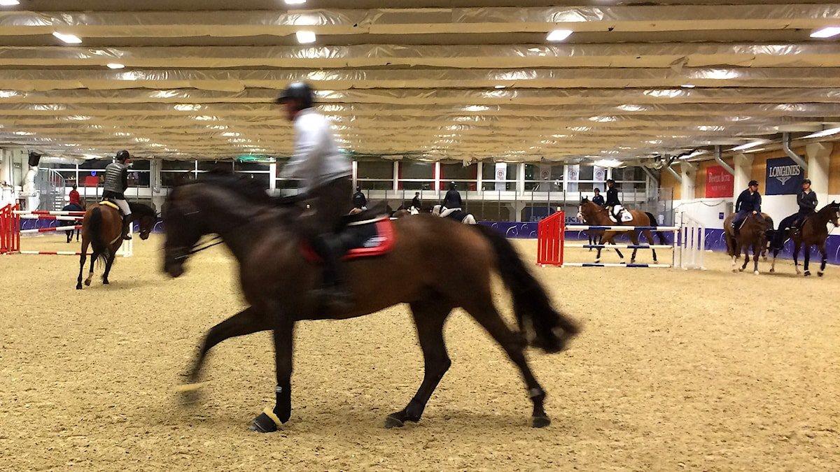 Huippuhevosilla ei tule ahdasta vaikka ratsukkoja on useita yhtä aikaa lämmittelemässä.
