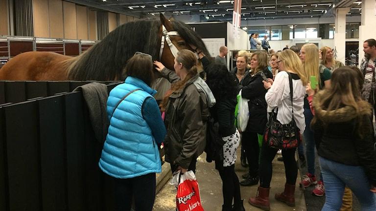 Hevonen ja yleisöä Horse Showssa