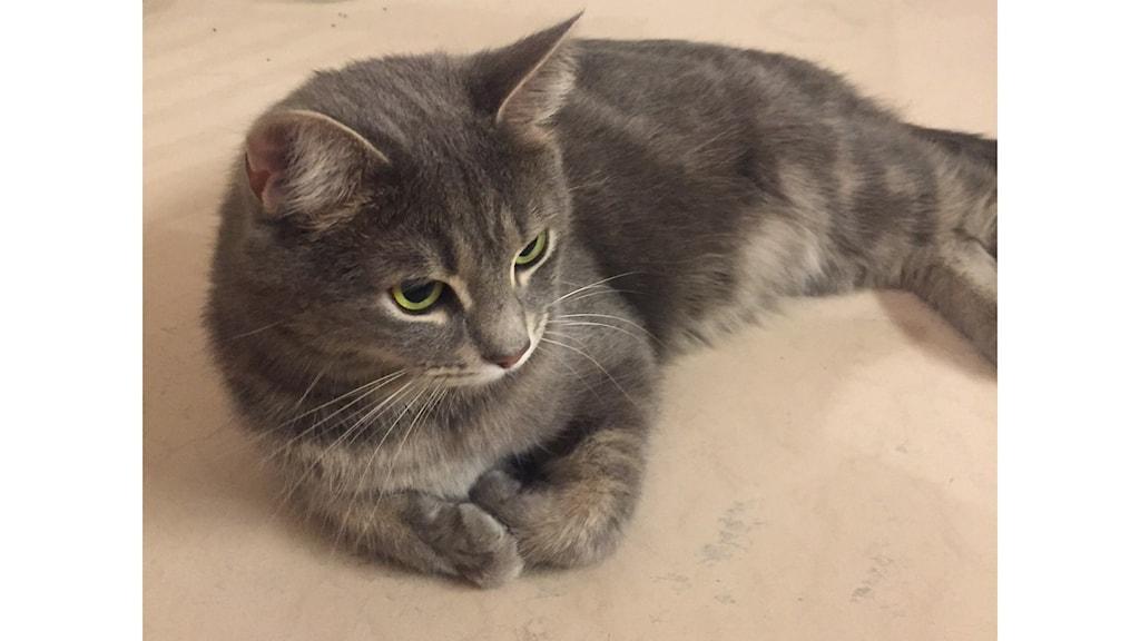 Kissa nimeltä Morris