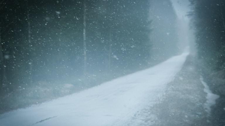 metsätie talvella, skogsväg på vinter