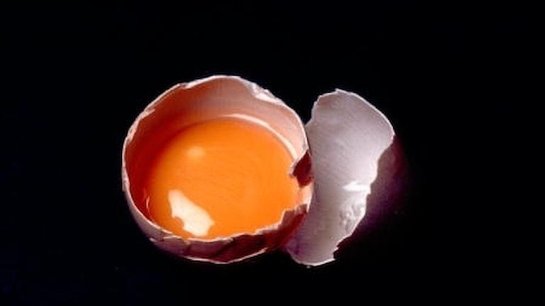 Raaka kananmuna avattuna.