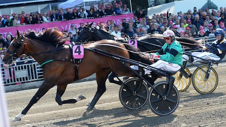 Hevonen Solvallan raviradalla Elitloppetissa 2016