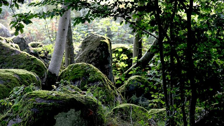 Metsä kivikko