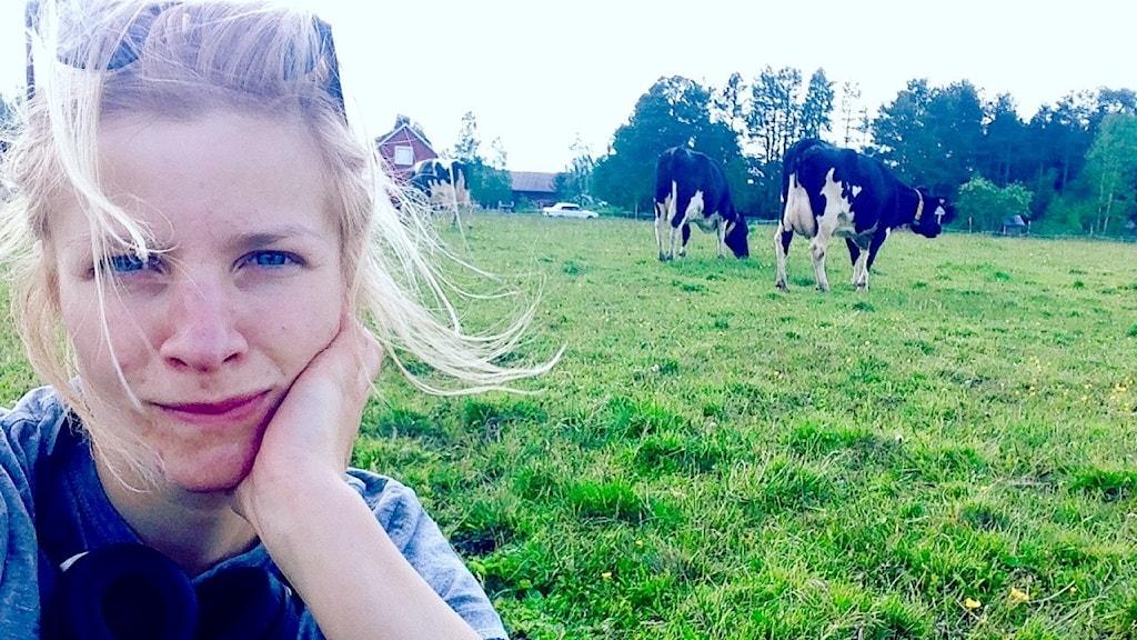 Annika Lantto ja lehmiä laitumella.