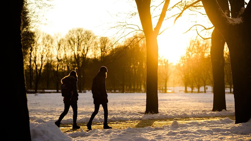 kaksi ihmistä kävelee talvisessa puistossa