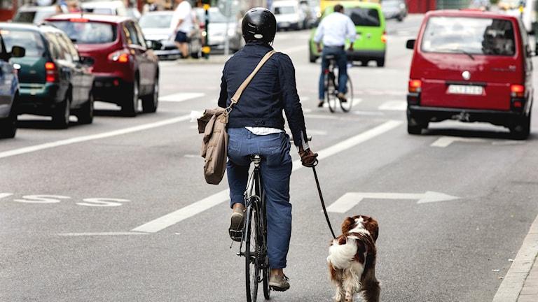 Pyöräilijä taluttaa koiraa autotiellä.