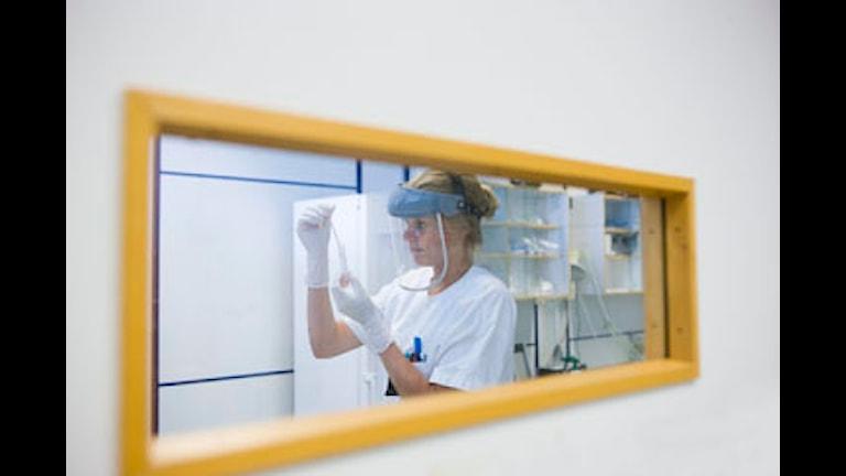 Laboratoriossa tutkia analysoi näytteitä.