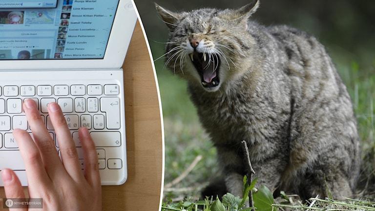 Tietokone ja kissa.