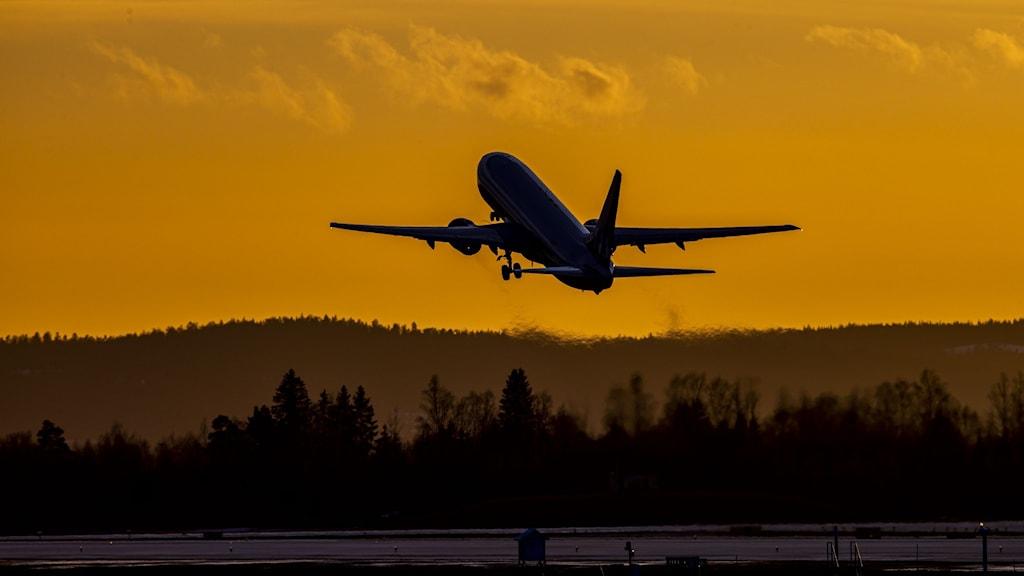 Lentokone nousee ilmassa auringonlaskussa, alakulmassa metsän huippuja. Kuva: Håkon Mosvold Larsen/NTB