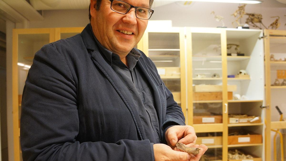 Jan Storå kädessään pieni hylkeen alaleuan luu.