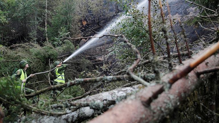 Kaksi palomiestä ampuu vettä metsässä.
