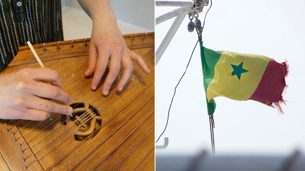 Kuvassa kädet jotka soittaa kannelta ja Senegalin lippu.