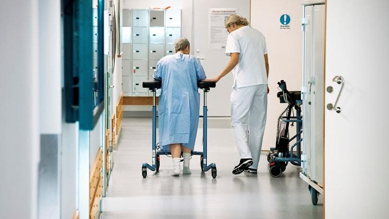 Kuvassa sairaanhoitaja auttaa iäkkäämpää henkilöä kävelemään rollaattorin kanssa sairaalakäytävässä.