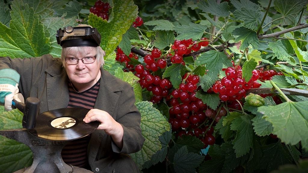Punaisia viinimarjoja pensaassa, Vasemmalla on myös kuva PIrjosta, hän on pukeutunut sepäksi.