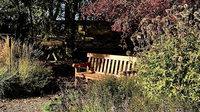 En bänk mitt växtlighet i Visbys botaniska trädgård.