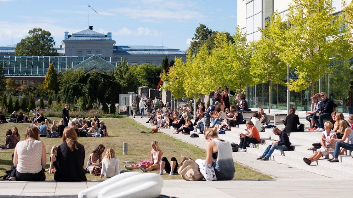 Useita opiskelijoita istuu auringossa pihalla portailla ja nurmella.