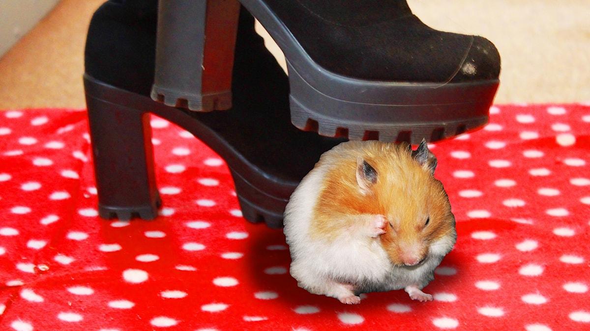 Photoshoppad bild där det ser ut som Arantxa trampar på en hamster. Foto: digital_image_fan/Flickr/CC BY 2.0/Gustaf Widegård/SR