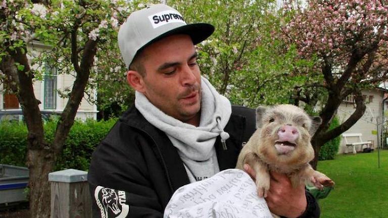 Minigrisen Mr Bacon tillsammans med husse Taisto. Foto: Jenny Allvin/Mariestads-tidningen