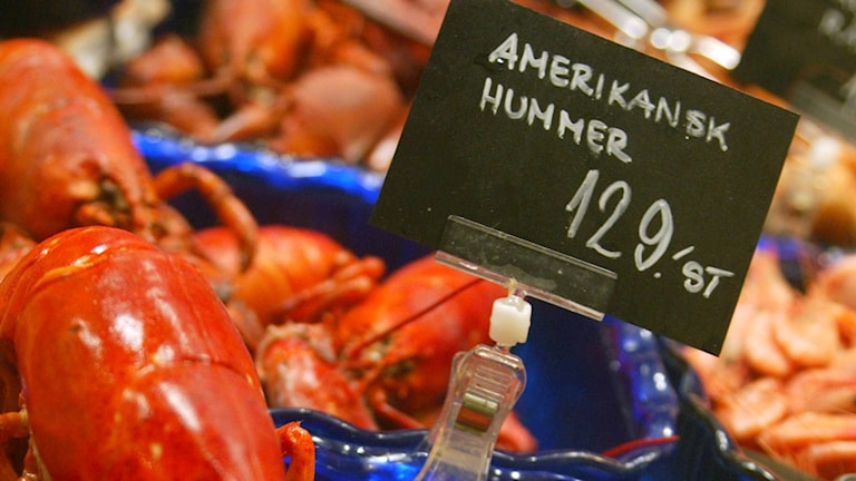American lobsters for sale in a Stockholm store. File photo: Henrik Montgomery / TT.