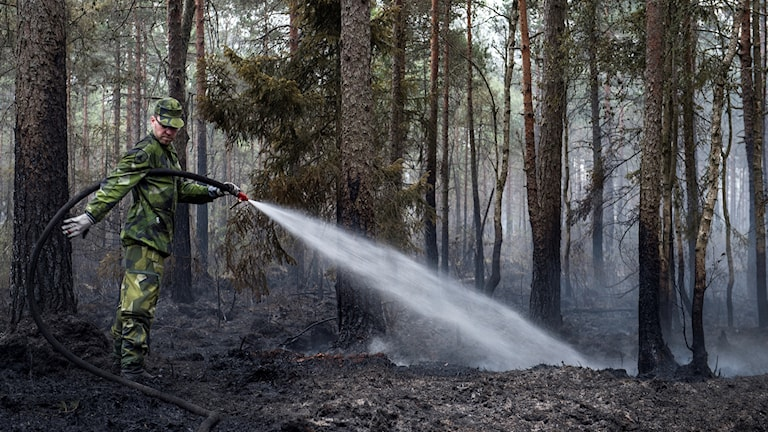 Firefighter spraying water on the ground in a forest.