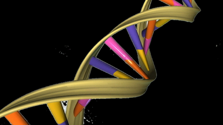 """Genetic research can help, but the search for a """"fat gene"""" is a myth. Graphic: Creative commons https://commons.wikimedia.org/wiki/File%3ADNA_Double_Helix.png"""