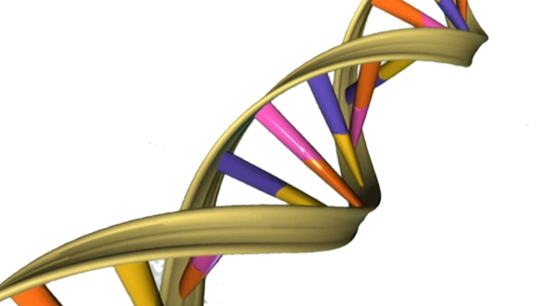 "Genetic research can help, but the search for a ""fat gene"" is a myth. Graphic: Creative commons https://commons.wikimedia.org/wiki/File%3ADNA_Double_Helix.png"