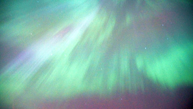Aurora over Stockholm. Photo: Kris Boswell/Sveriges Radio
