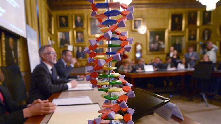 A model of a DNA molecule sitting on the table during the announcement of the Nobel chemistry prize. Photo: Fredrik Sandberg / TT