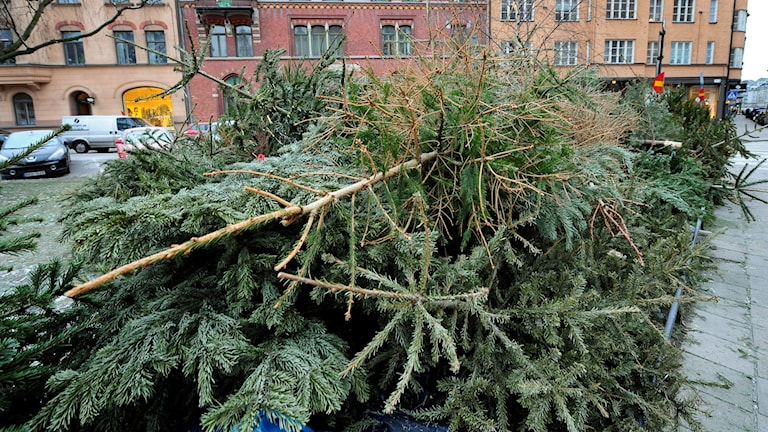 File photo of thrown out Christmas trees, Photo: Foto: Anders Wiklund/TT