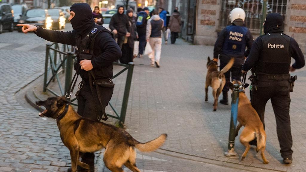 Police officers with dogs during a raid in the Molenbeek neighborhood of Brussels, Belgium. File photo: Geert Vanden Wijngaert / AP / TT.