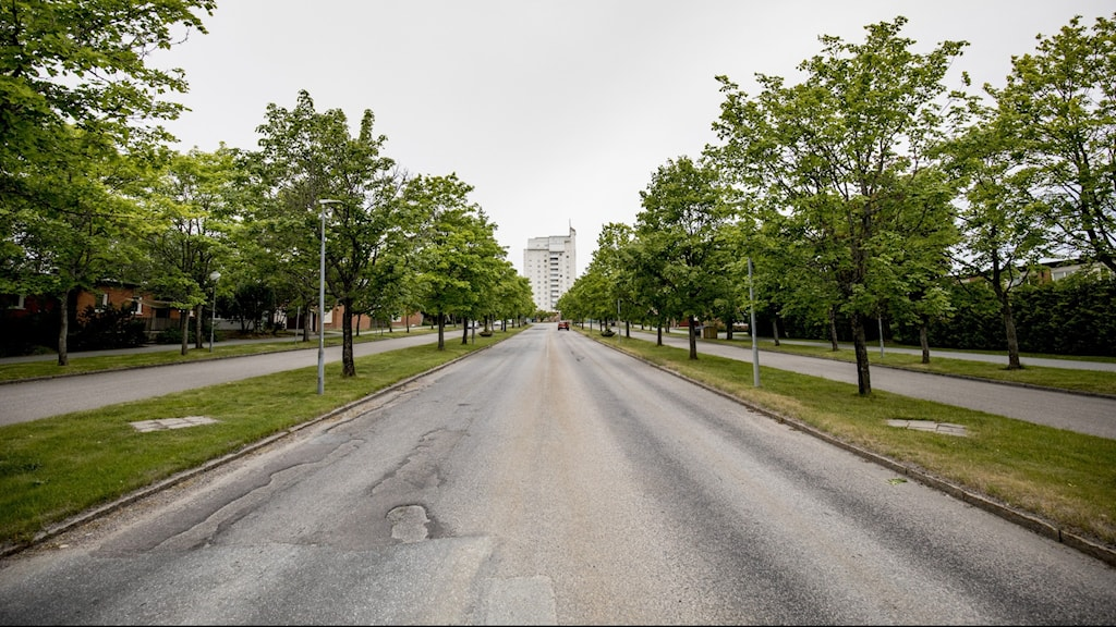 A tree-lined street leading up to a building in the distance.