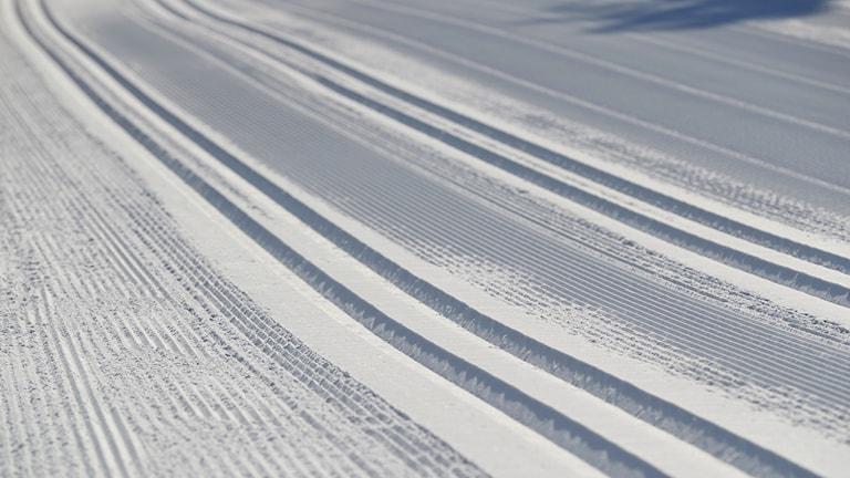 Cross country ski tracks in the sun.