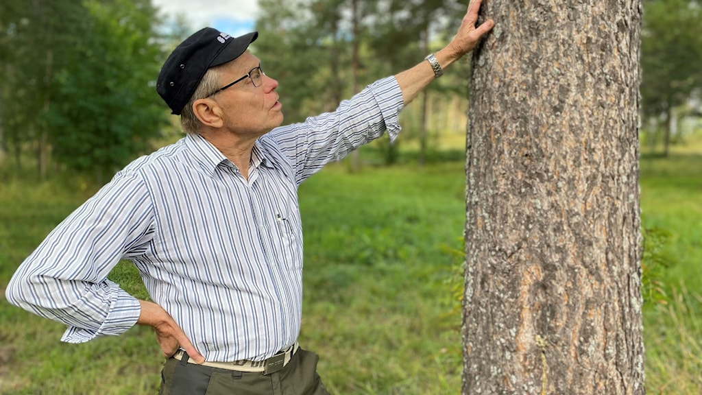 A man looking up and touching a tree trunk.