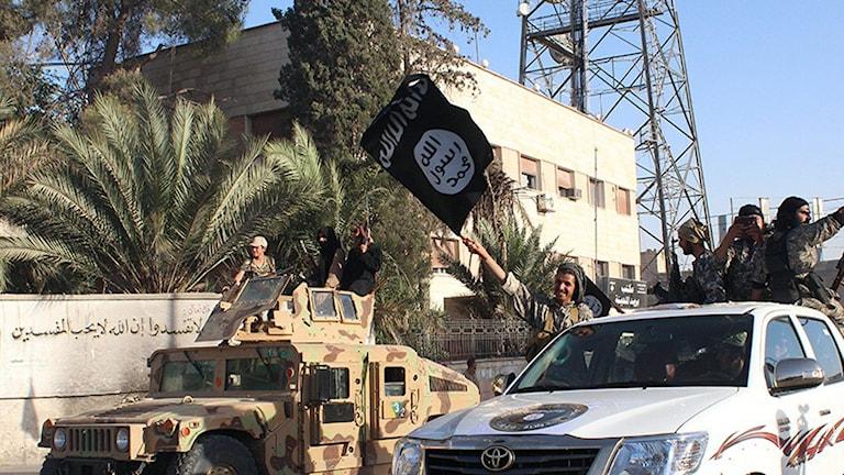 إرهابيو داعش.