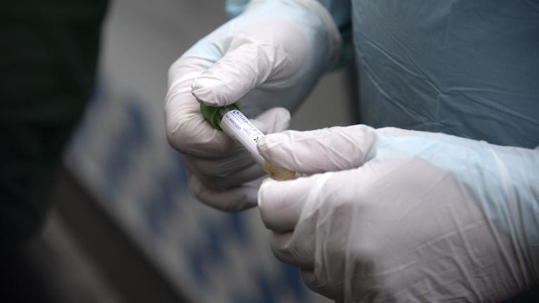 File photo of a Coronavirus test