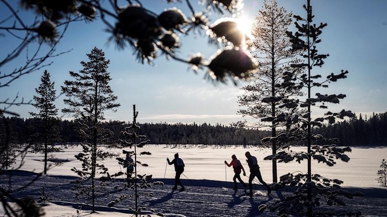 Skier hitting the snow outside of Mora, central Sweden.