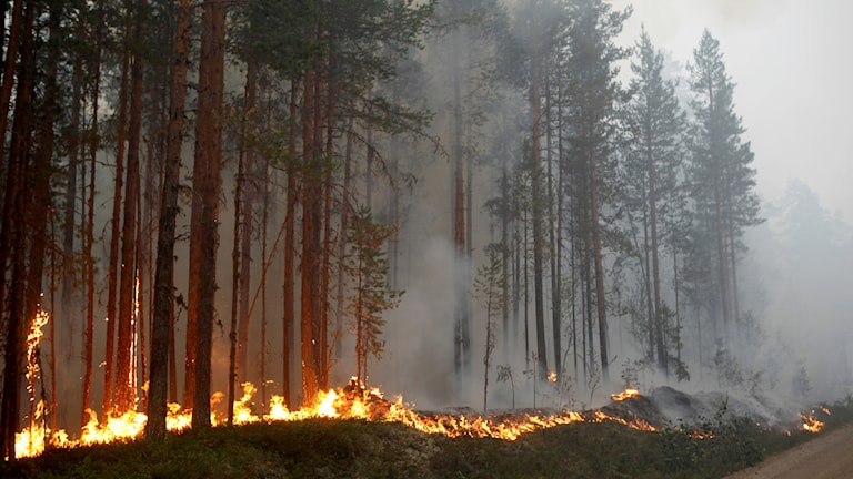 Forest fire in Kårböle.