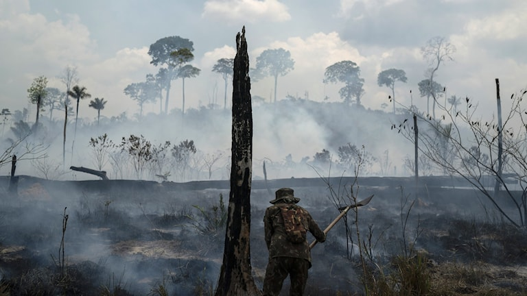 A  lone Brazilian soldier trying to beat the flames in a torched section of the Amazon rainforest