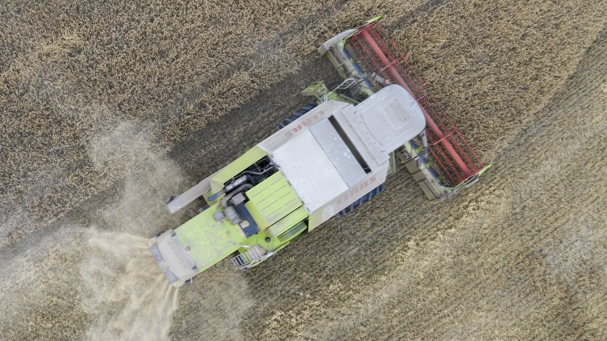 A combine harvester taking in the crop, seen from above.