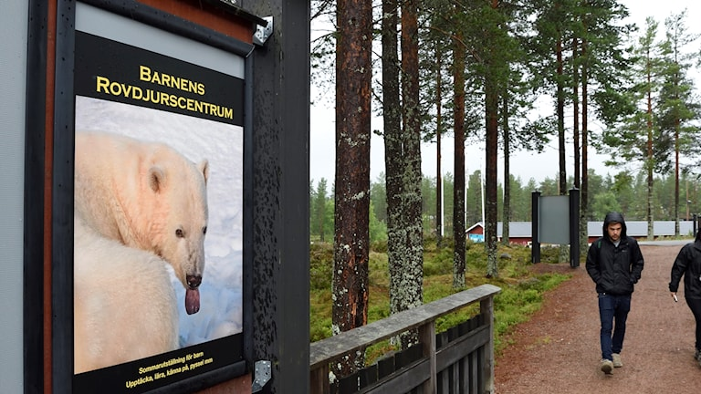 Anders Blomqvist, chief executive of Grönklittsgruppen said he saw no reason to change procedures at Orsa Zoo.