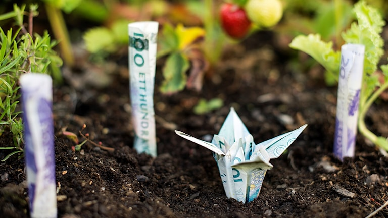 paper money folded into shapes and planted in a garden