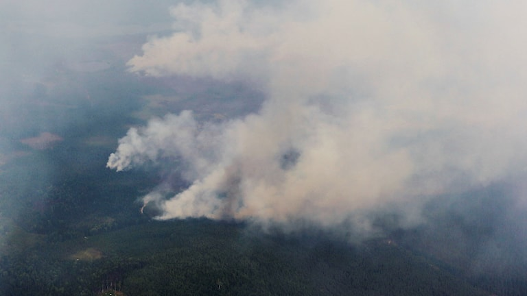 Photo of forest fire from the air