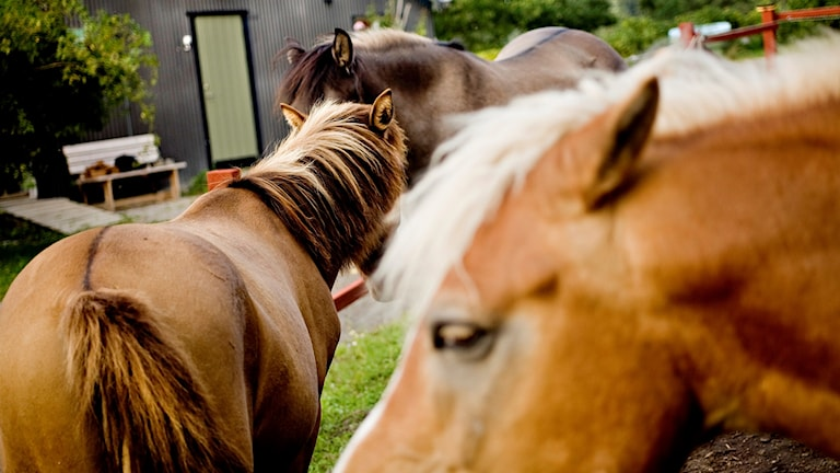 picture of 3 horses