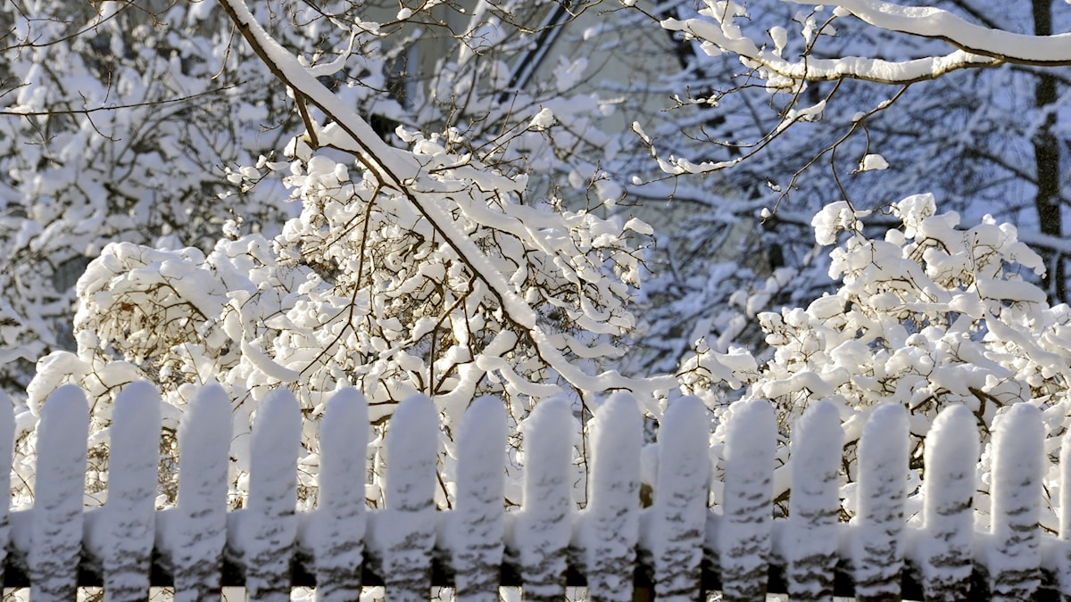 A detail shot of a picket fence and trees in the background, all topped with snow.