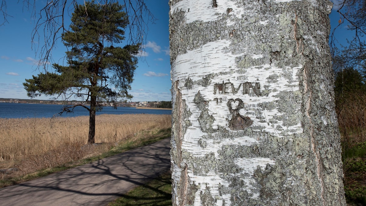 "A tree with the word ""Kevin"" cut into the trunk and a heart."