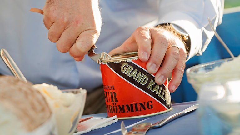 Opening a can of surströmming.