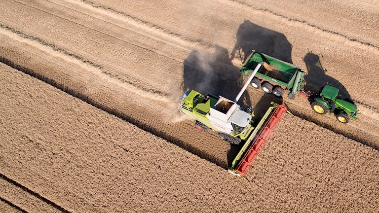 Farming vehicles in a field of wheat.