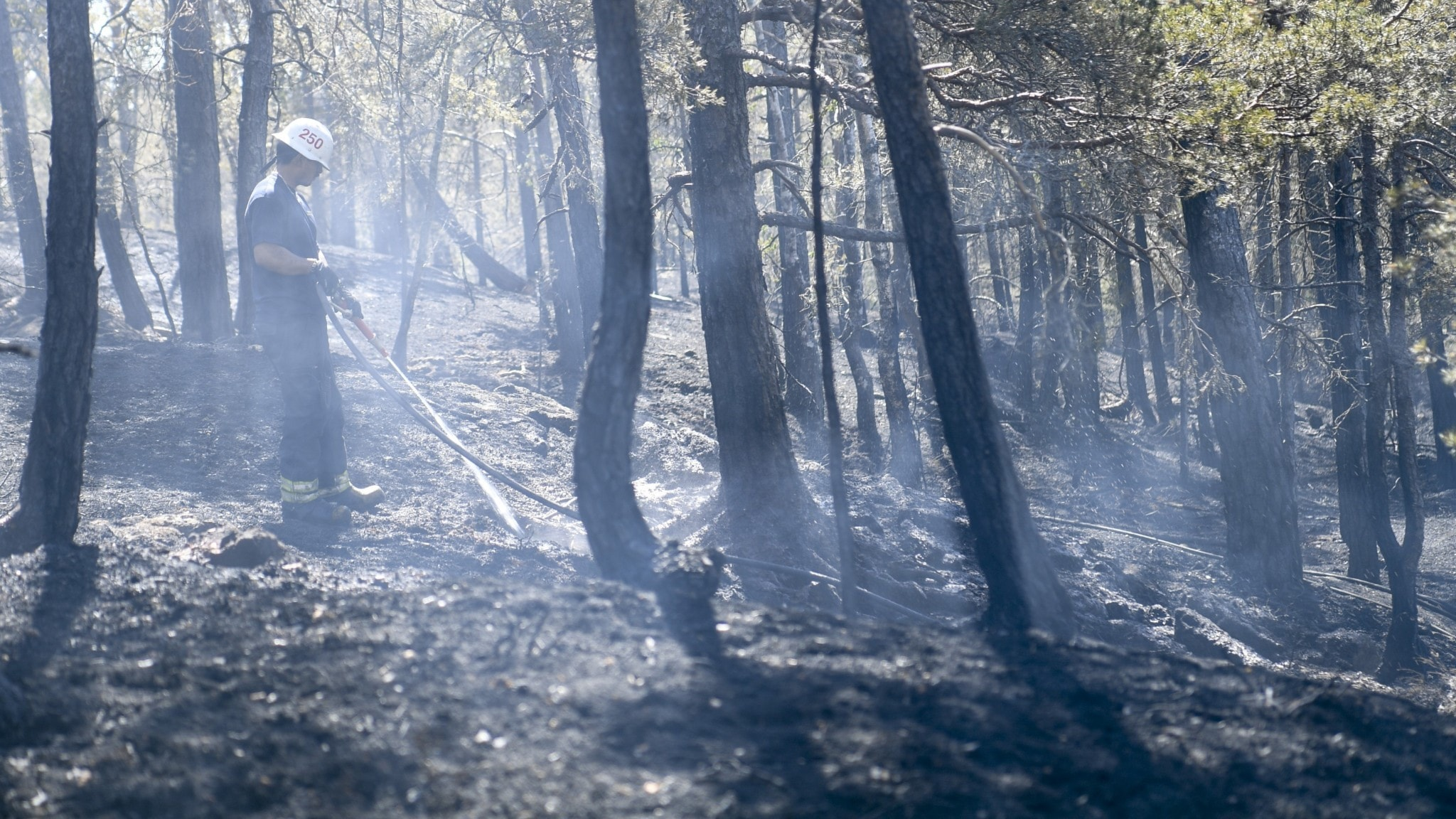 A smokey, burnt woods with a firefighter standing in between some trees.